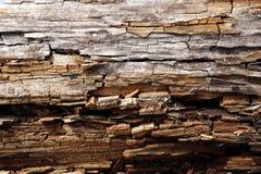 Struttura di legno di pino Fotografia Stock