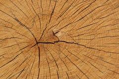 Struttura di legno di quercia Fotografia Stock Libera da Diritti