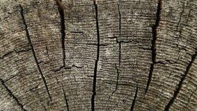 Struttura di legno di vecchia sezione trasversale approssimativa per fondo Fotografie Stock Libere da Diritti