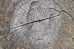 Struttura di legno dura asciutta naturale monocromatica fotografia stock