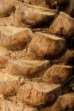 Struttura di legno e fondo del vecchio albero naturale della data fotografie stock libere da diritti