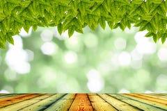 Struttura di legno e sfondo naturale Immagine Stock