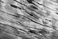 Struttura di legno - macro Fotografia Stock
