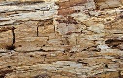Struttura di legno marcia Immagini Stock