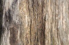 Struttura di legno naturale Fotografia Stock Libera da Diritti