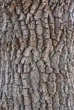 Struttura di legno naturale scura immagine stock