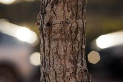 Struttura di legno nel centro Fotografia Stock Libera da Diritti