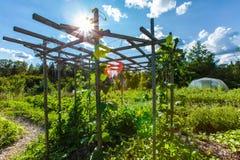 Struttura di legno per i fagioli e piselli e viti da scalare sopra fotografie stock libere da diritti