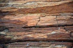 Struttura di legno petrificata immagine stock