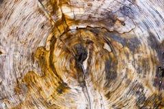 Struttura di legno Petrified immagini stock