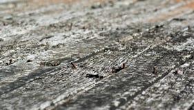 Struttura di legno portata vecchie plance Immagini Stock Libere da Diritti