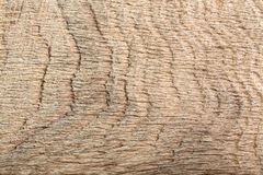 Struttura di legno scura graffiata naturale della quercia della palude come fondo Fotografia Stock