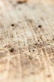 Struttura di legno senza corteccia Fotografia Stock Libera da Diritti