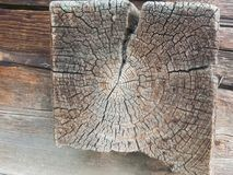 Struttura di legno stagionata con la sezione trasversale di un tronco di albero Immagine Stock Libera da Diritti