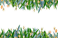 Struttura di orizzontale del fiore Immagini Stock