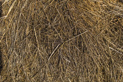 Struttura di paglia asciutta, erbe asciutte, fieno Fotografie Stock