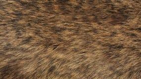 Struttura di pelliccia - volpe - alta risoluzione Fotografie Stock Libere da Diritti
