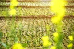 Struttura di piantatura di verdure verde con il suolo immagini stock