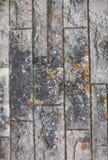 Struttura di pietra astratta di lerciume con la muffa come fondo Immagine Stock