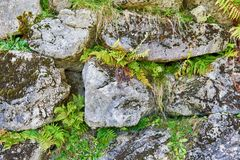 Struttura di pietra con muschio ed erba Alta qualit? ed acutezza immagine stock libera da diritti