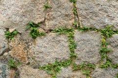 Struttura di pietra dell'erba Immagine Stock Libera da Diritti