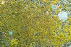Struttura di pietra dettagliata con il lichene giallo Fotografie Stock Libere da Diritti