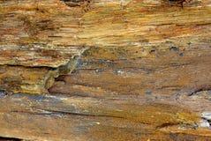 Struttura di pietra di legno Immagini Stock