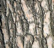 Struttura di priorità bassa di legno Immagini Stock