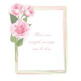 Struttura di Rosa del fiore isolata su fondo bianco. Decorazione floreale. Immagini Stock
