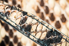 Struttura di snakeskin genuino Fotografia Stock Libera da Diritti