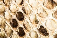 Struttura di snakeskin genuino Fotografia Stock