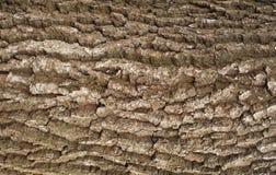 Struttura di sollievo della corteccia della quercia con muschio verde ed il lichene blu su  Fotografia Stock Libera da Diritti
