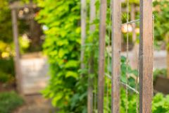 Struttura di sostegno di legno verde di giardinaggio delle verdure della toppa immagine stock