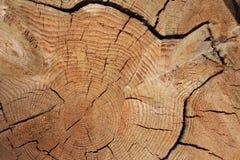 Struttura di taglio del fascio dell'albero immagine stock