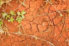 Struttura di terra incrinata, fango asciutto con le foglie Immagini Stock Libere da Diritti