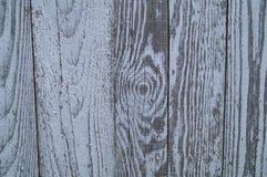 Struttura di un albero su un fondo grigio immagine stock