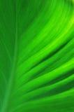 Struttura di un foglio verde Immagini Stock