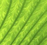 Struttura di un foglio verde Fotografia Stock Libera da Diritti