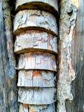 Struttura di un tronco vecchio di olivo fotografia stock libera da diritti