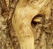 Struttura di vecchia corteccia di albero variopinta Immagini Stock