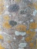 Struttura di vecchia corteccia marrone Fotografia Stock