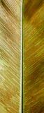 Struttura di vecchia foglia di legno Immagini Stock Libere da Diritti