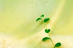 Struttura di vecchia pittura sulla foglia di verde della parete del cemento Fotografia Stock