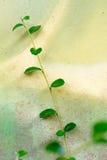 Struttura di vecchia pittura sulla foglia di verde della parete del cemento Fotografia Stock Libera da Diritti