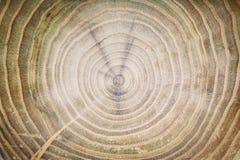 Struttura di vecchio albero, taglio rotondo della sega, fondo di legno fotografie stock libere da diritti
