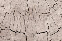 Struttura di vecchio ceppo di legno Fotografia Stock Libera da Diritti