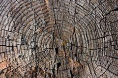 Struttura di vecchio legno con gli anelli annuali Fotografia Stock