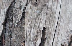 Struttura di vecchio legno del teck Fotografie Stock