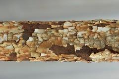 Struttura di vecchio tubo arrugginito arrugginito del metallo Immagine Stock Libera da Diritti