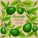 Struttura di vettore dell'avocado fotografie stock libere da diritti